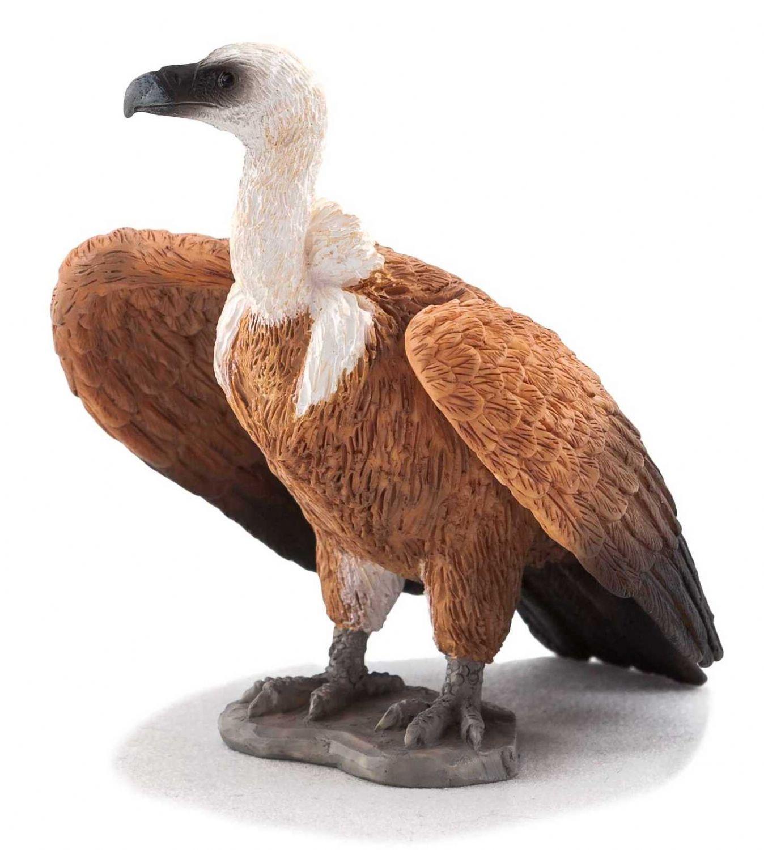 Animal Planet Kizil Akbaba